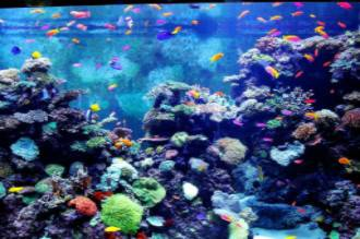 Красота в аквариуме