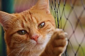 Опасные продукты для котов