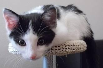 Имена для кошек и котов