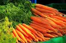 Как правильно подготовить семена моркови к посадке?