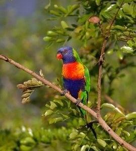 Корма для попугаев и декоративных птиц