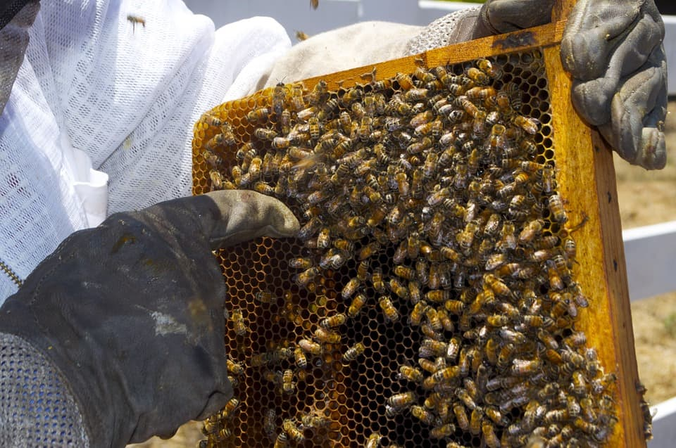 Пчеловодческий нож угловой