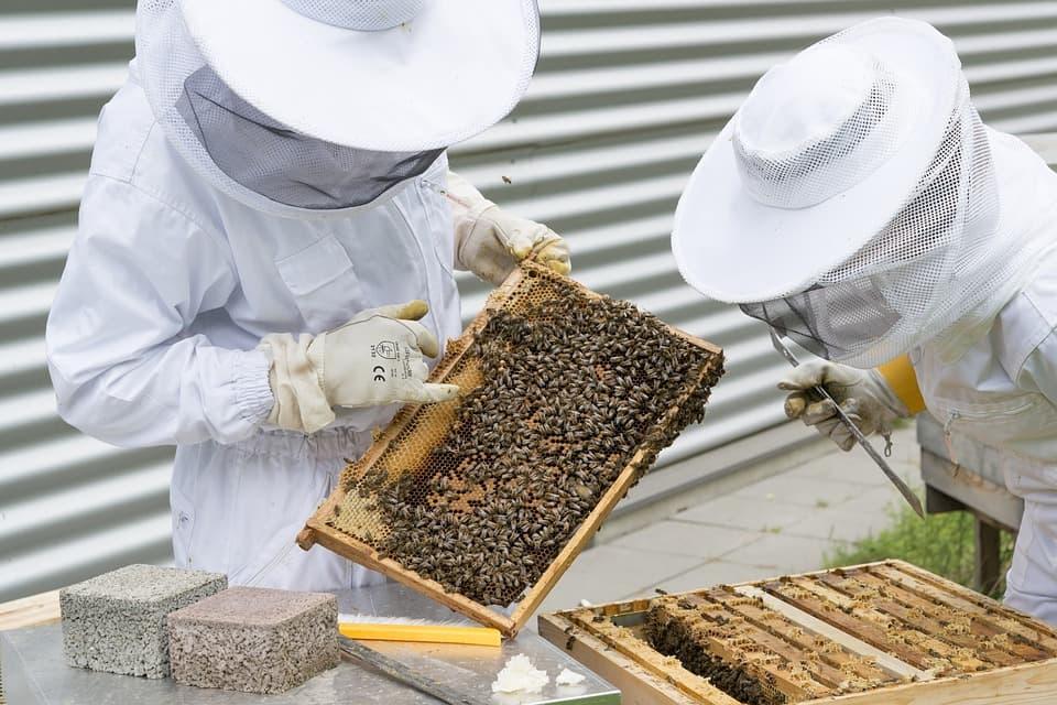 Пасечники и пчелы