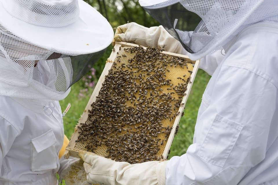 Пчелы и пасечники