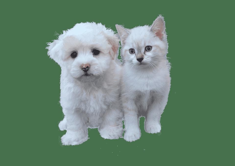 Антигельминтик для собак и кошек