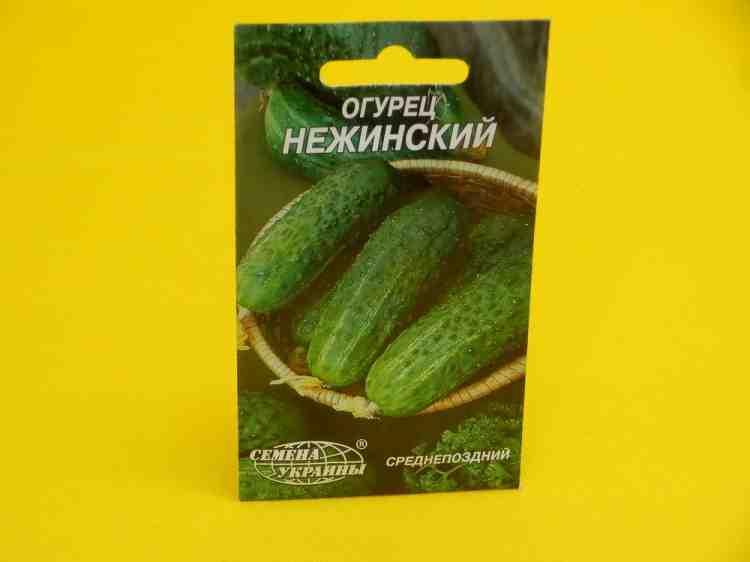 Семена огурцов Нежинский
