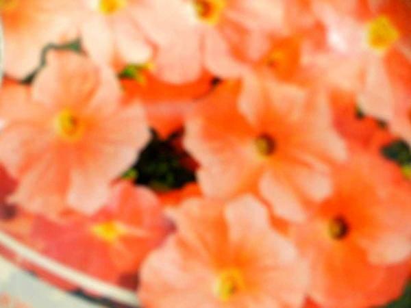 Семена петунии ампельной сорта Лавина лососевая