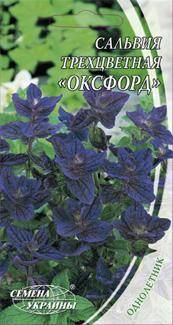 Семена сальвии трехцветной сорта Оксфорд