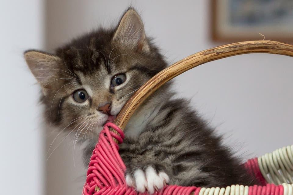 Котенок в кошике