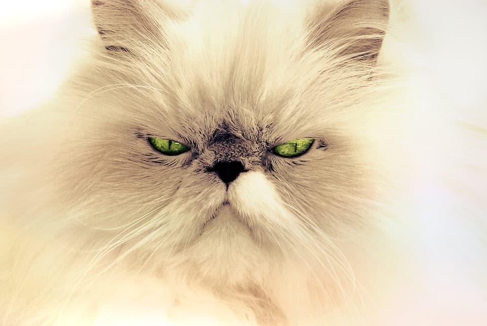 Стерилизоанный кот