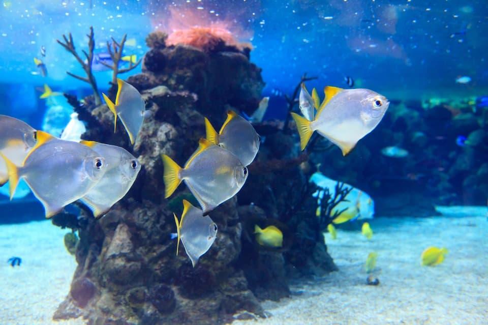 Аквариумный мир рыб