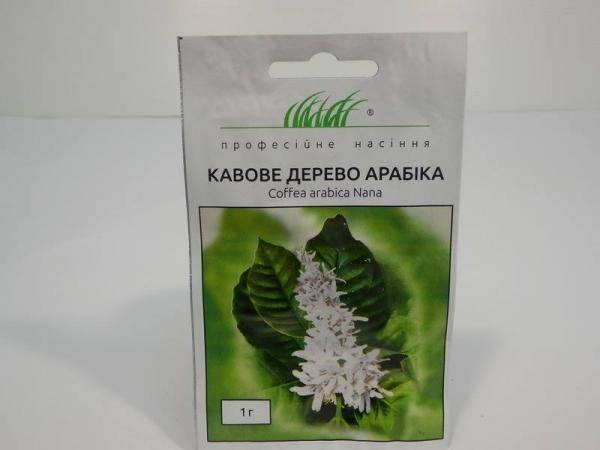 Семена кофейного дерева Арабика