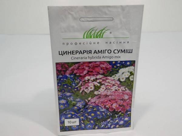 Семена цинерарии Амиго смесь