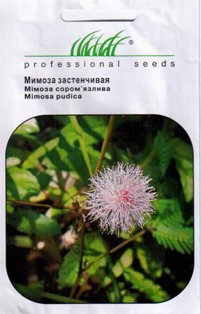 Семена Мимозы застенчивой