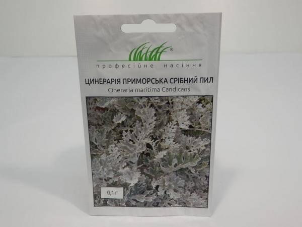 Семена цинерарии приморской Серебрянная пыль