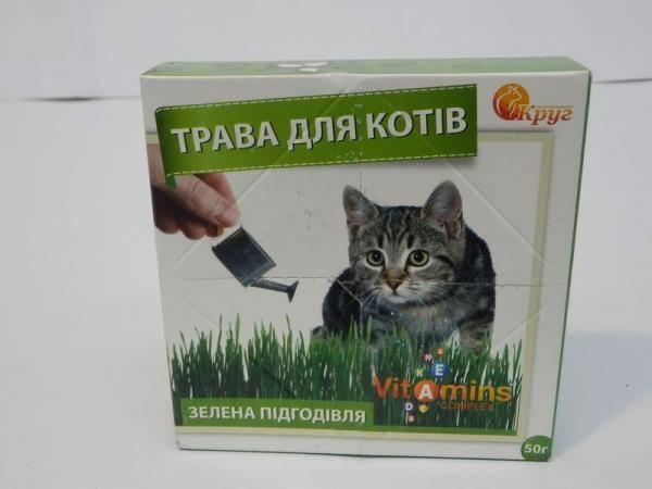 Трава для котов, зеленая подкормка