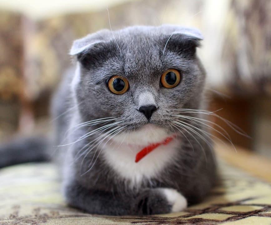 Кошка с погремушкой