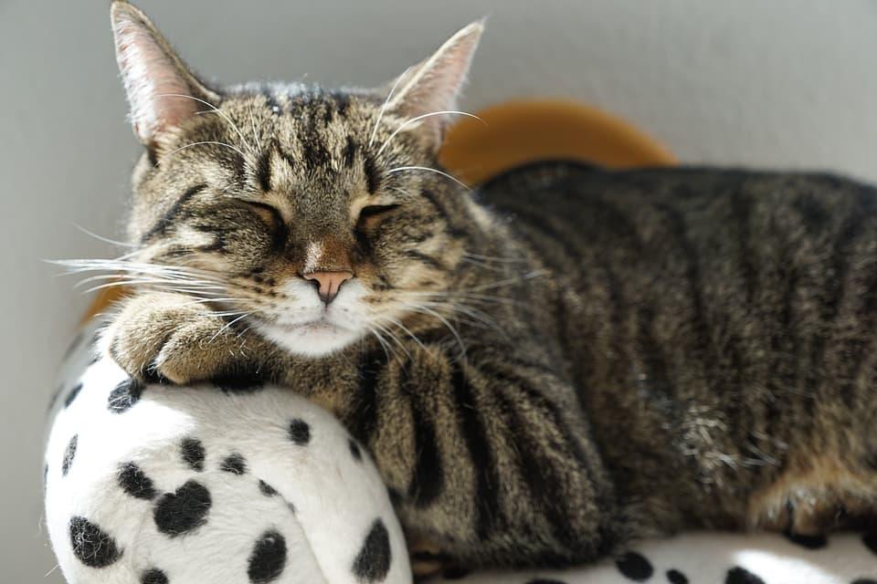 миска для кошек и собак