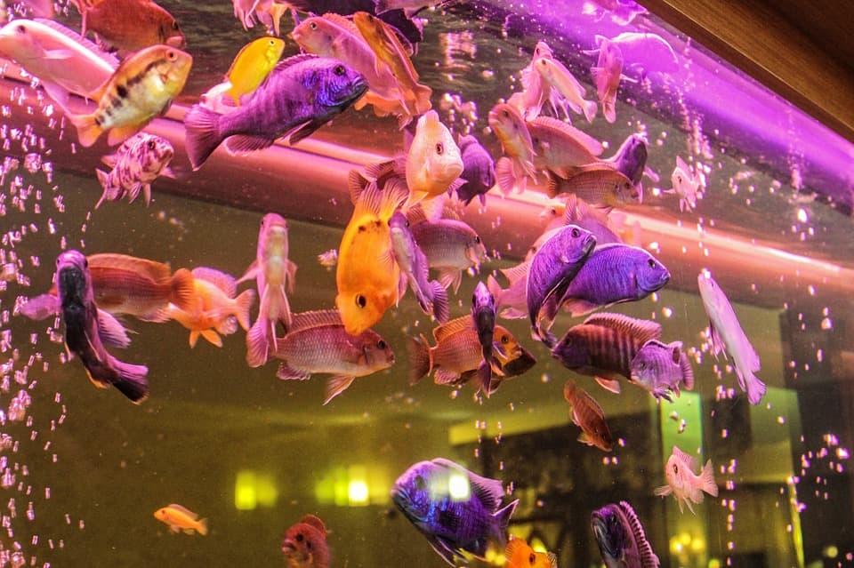 Аквариум с красивыми рыбками