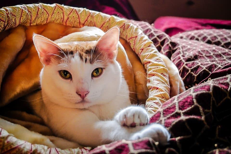 Кот красивый
