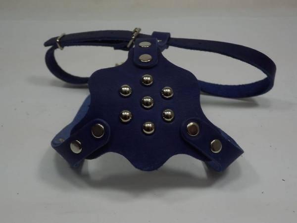 Шлея фасонная кожаная с фурнитурой для мопсов(синий)
