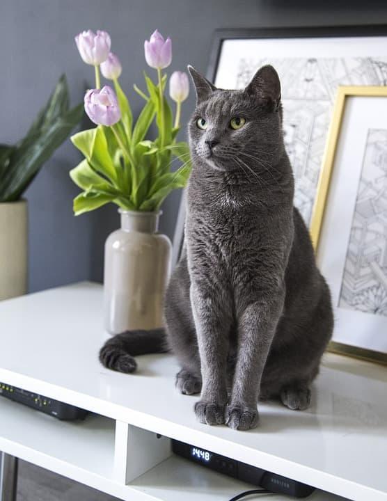 Кот и тюльпан