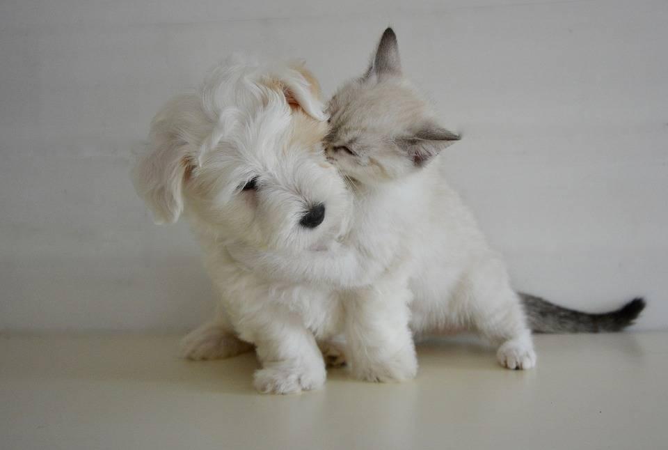 комплексный пробиотик для собак и кошек