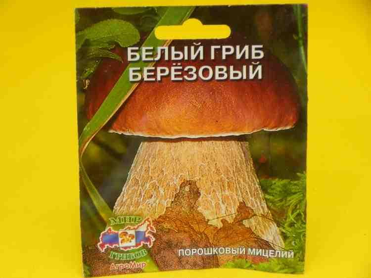 Мицелий Белого гриба Березового на 3 м кв. - 100 г