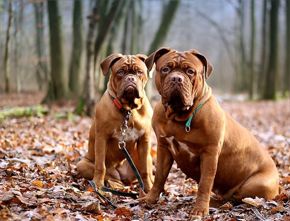 Bolfix для собак