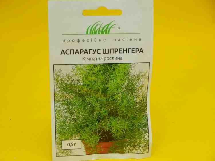 Семена аспарагуса Шпренгера