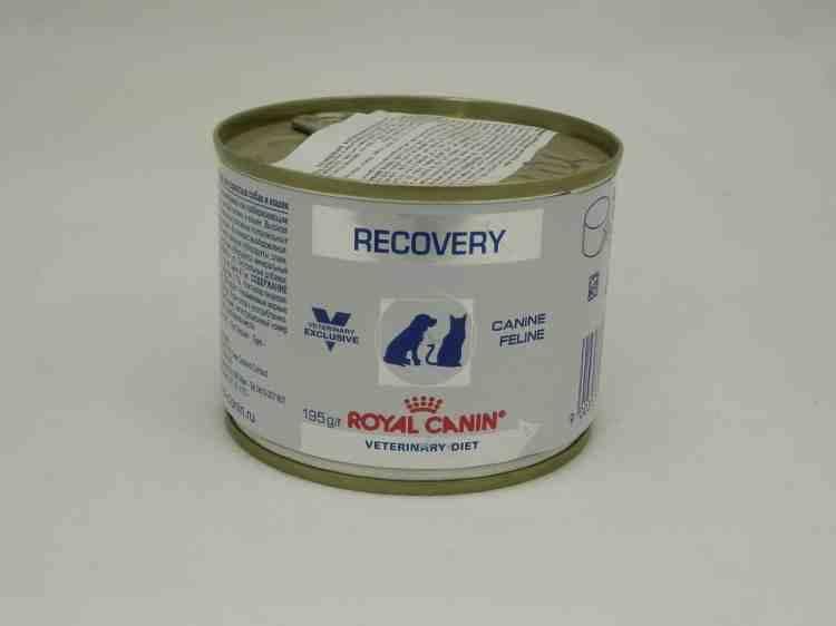 Консервы для кошек Royal Canin Recovery (Роял канин для выздоравливающих)