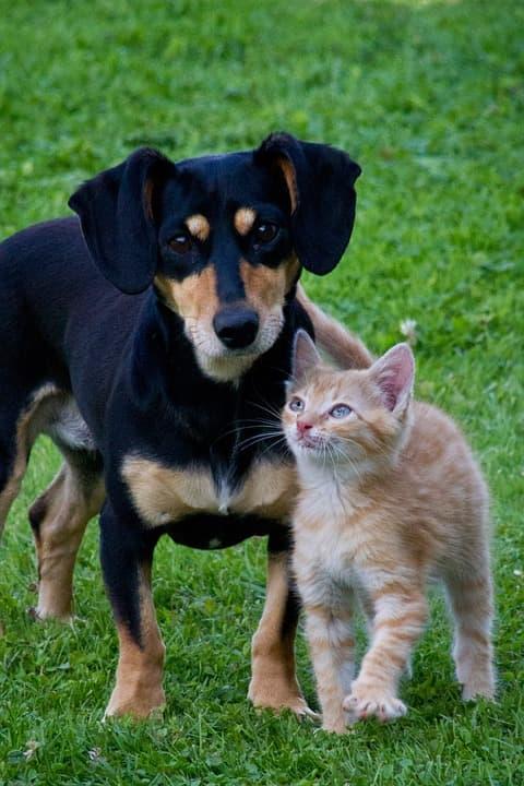 Собаки, кошки
