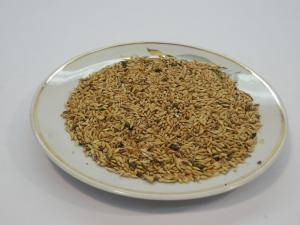 Суданская трава (суданка) - семена