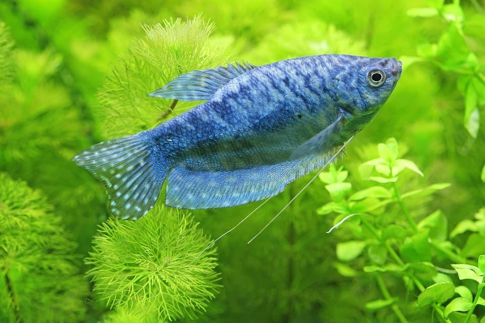 Рыба и водоросли
