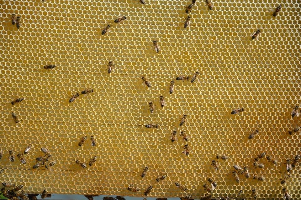 пчелиные рамки