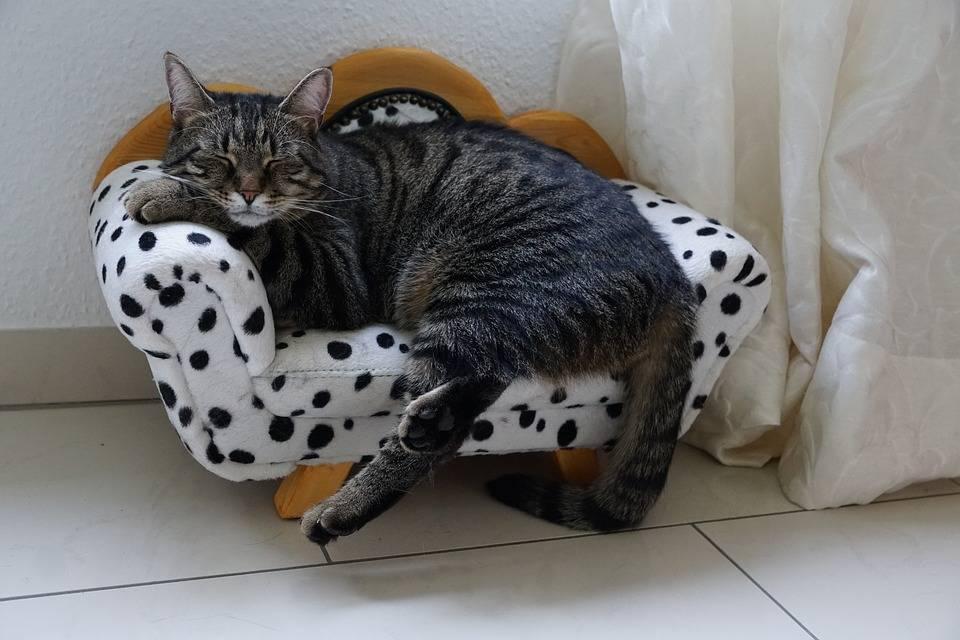 любимый диванчик